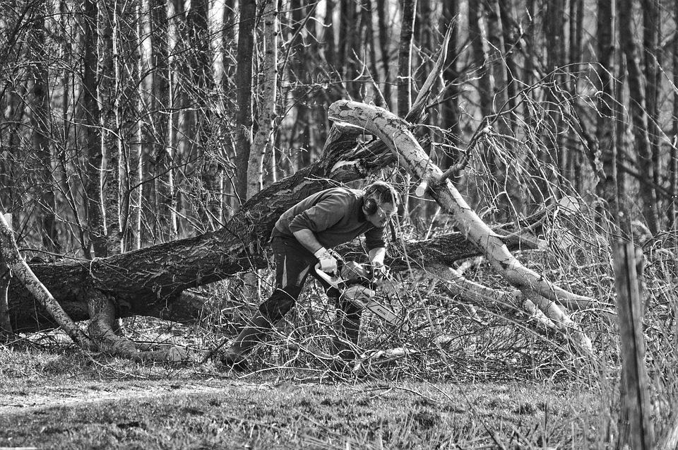 Nei boschi non deve mancare la sicurezza sul lavoro come invece è successo a Summonte